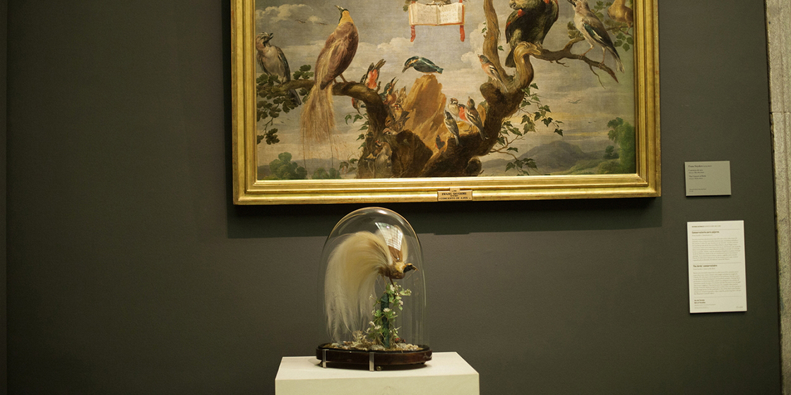 Museo del Prado. Exhibition Historia Natural